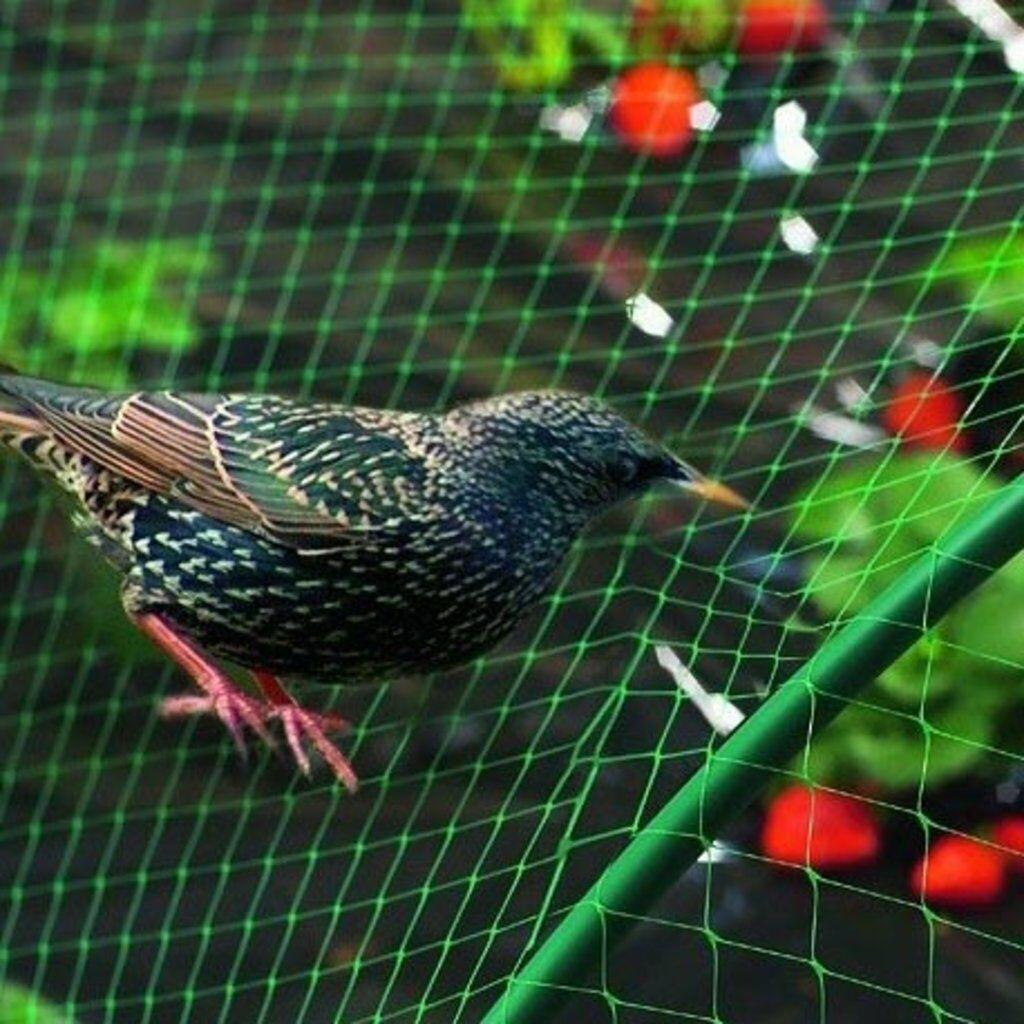 Mreža protiv ptica